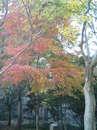 2006.11.24紅葉