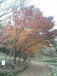 2006.12.13四季の森 010.jpg