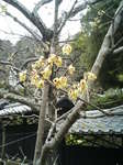 2007.01.12鎌倉(携帯) 001.jpg
